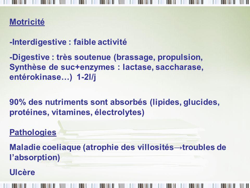 Motricité -Interdigestive : faible activité.