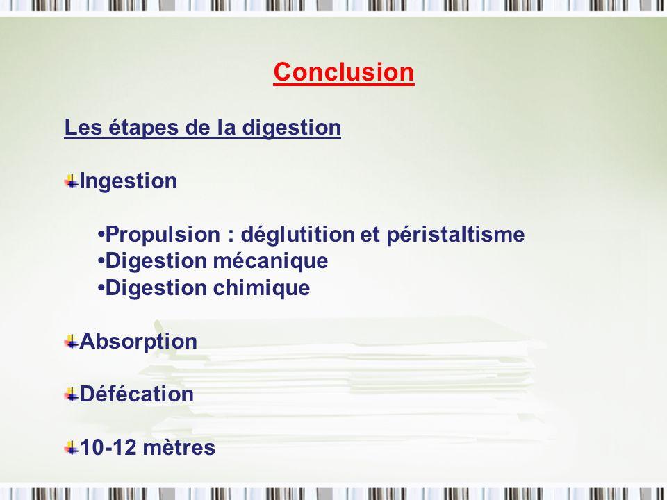 Conclusion Les étapes de la digestion Ingestion