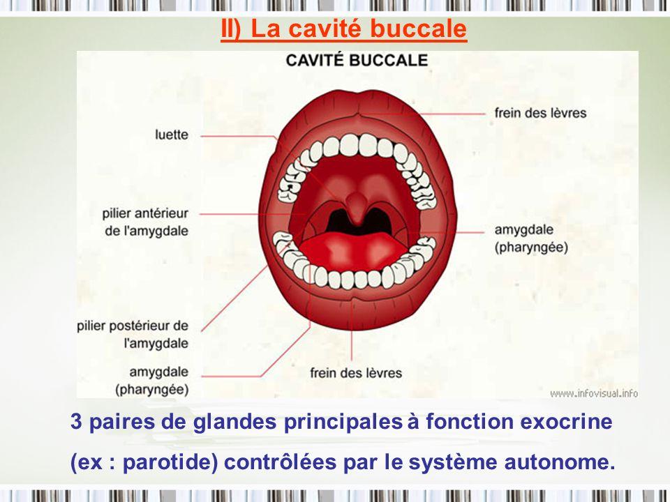 II) La cavité buccale 3 paires de glandes principales à fonction exocrine.
