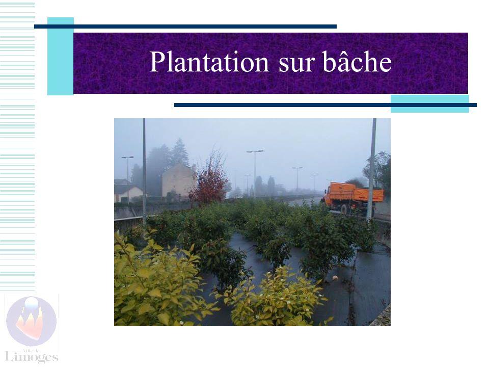 Plantation sur bâche