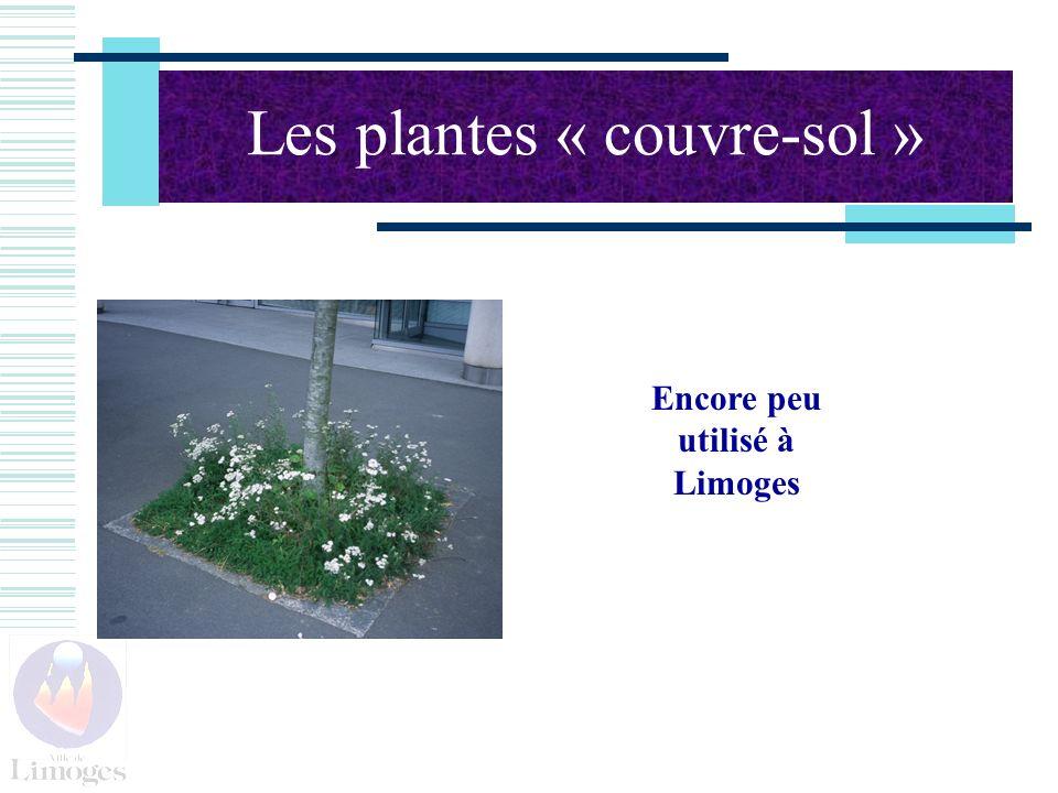 Les plantes « couvre-sol »