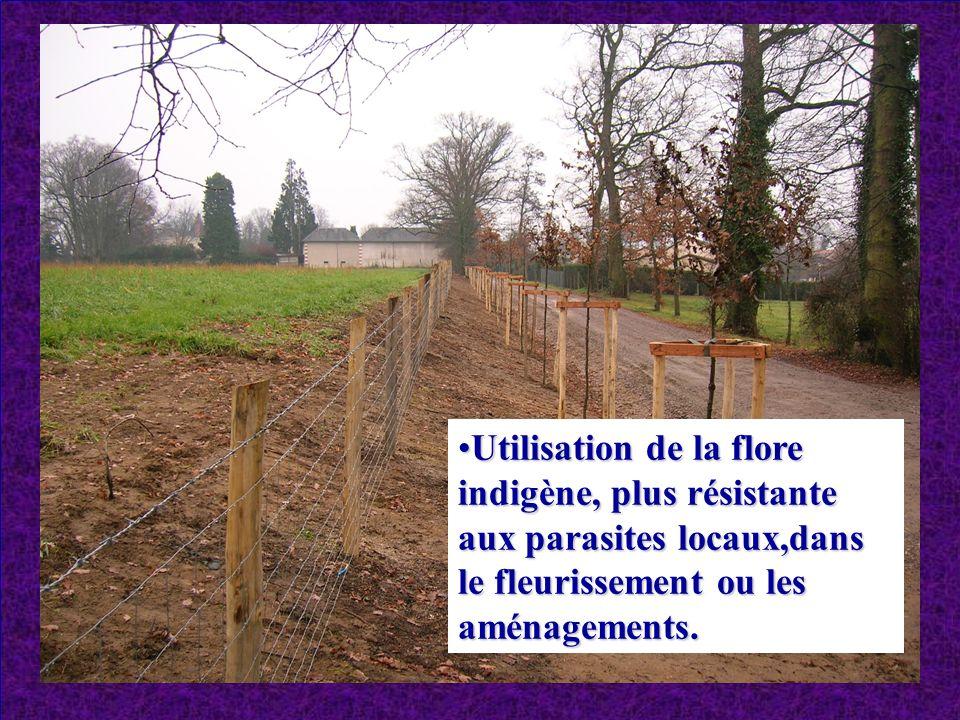 Utilisation de la flore indigène, plus résistante aux parasites locaux,dans le fleurissement ou les aménagements.