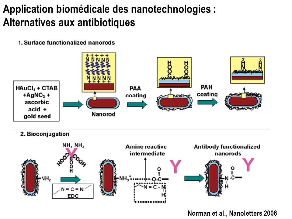 Application biomédicale des nanotechnologies : Alternatives aux antibiotiques