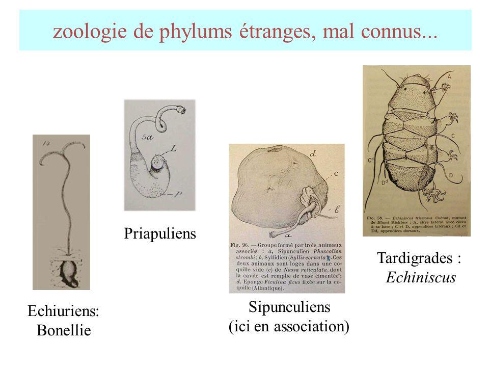 zoologie de phylums étranges, mal connus...