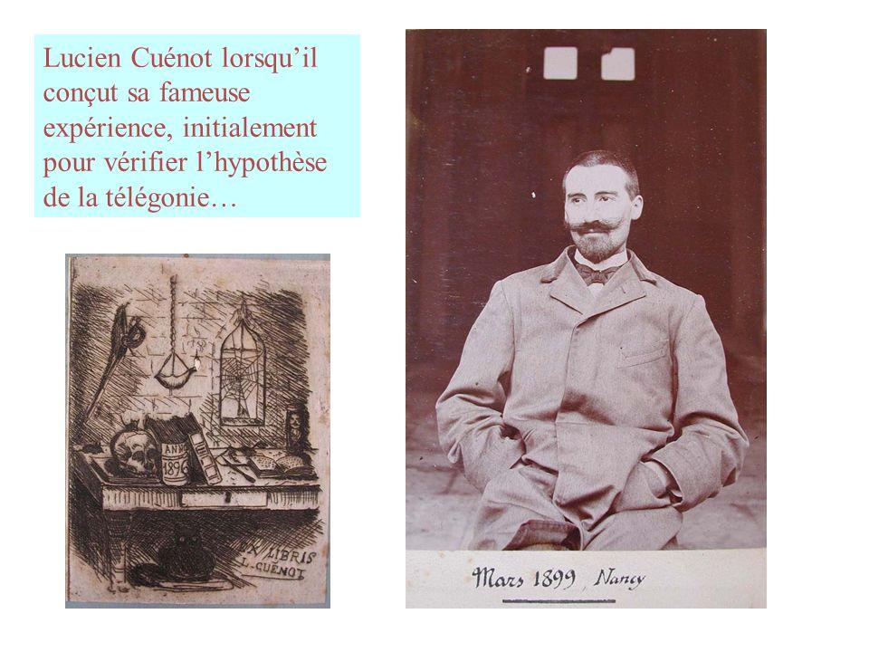Lucien Cuénot lorsqu'il conçut sa fameuse expérience, initialement pour vérifier l'hypothèse de la télégonie…
