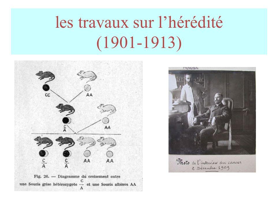 les travaux sur l'hérédité (1901-1913)