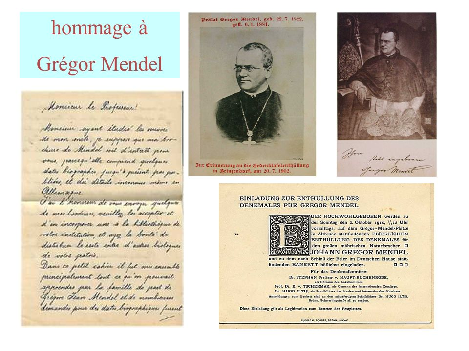 hommage à Grégor Mendel