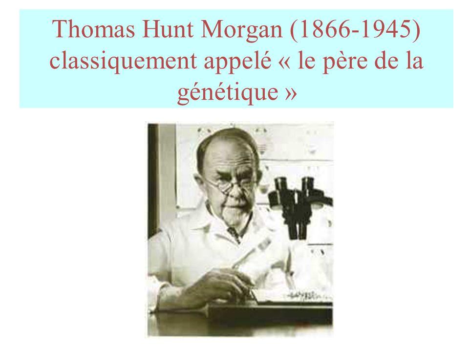 Thomas Hunt Morgan (1866-1945) classiquement appelé « le père de la génétique »