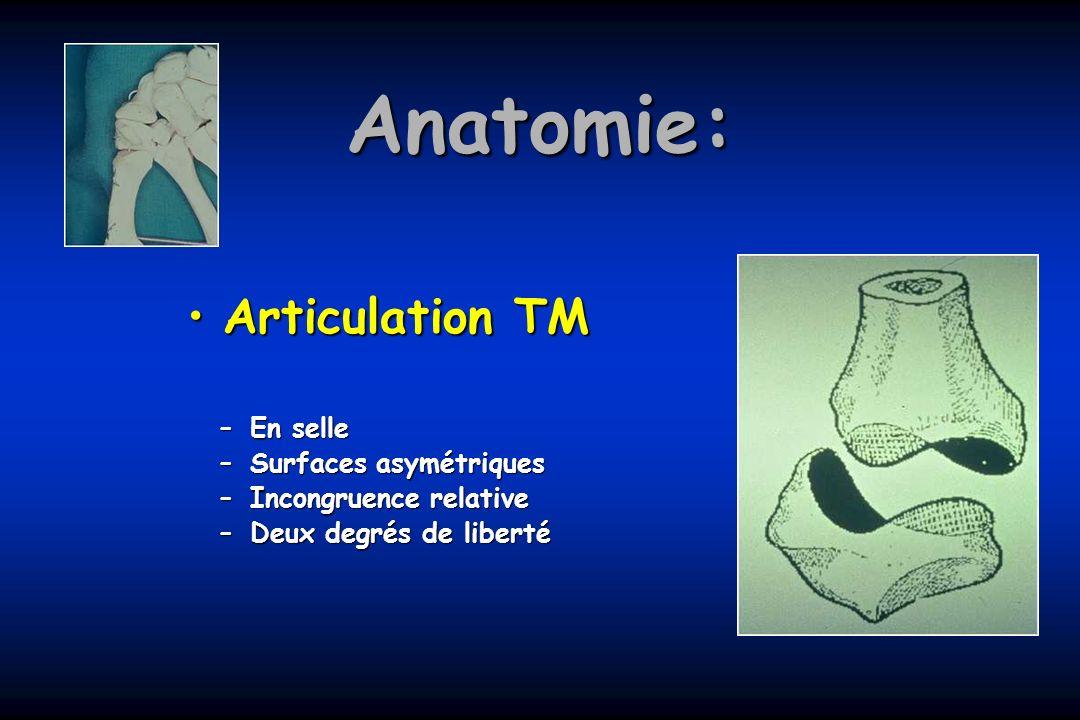 Anatomie: Articulation TM En selle Surfaces asymétriques