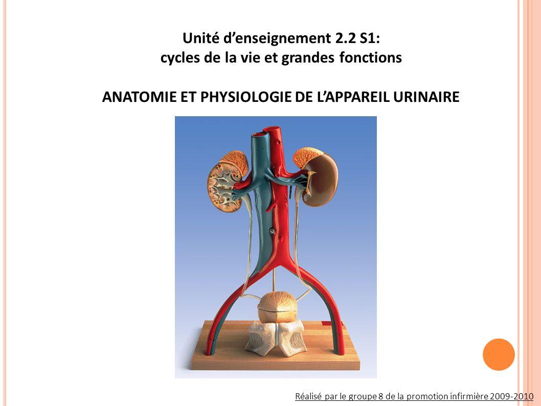 Unité d'enseignement 2.2 S1: cycles de la vie et grandes fonctions ANATOMIE ET PHYSIOLOGIE DE L'APPAREIL URINAIRE