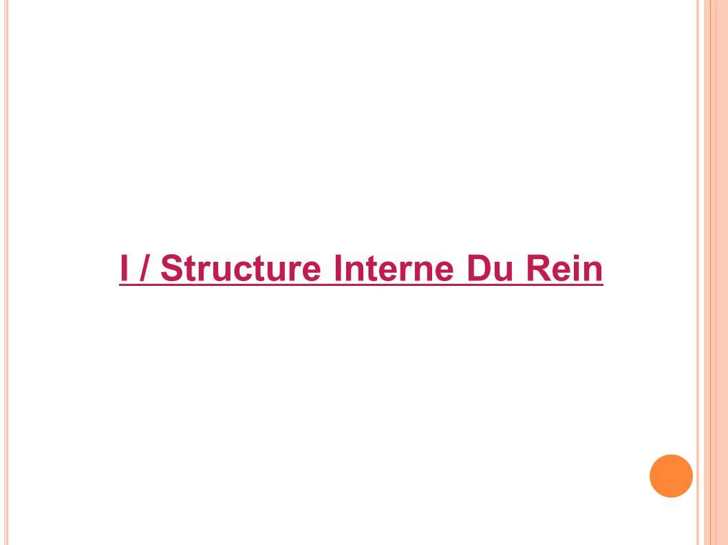 I / Structure Interne Du Rein
