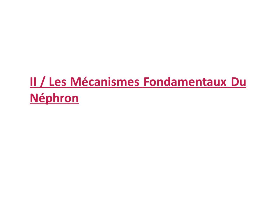 II / Les Mécanismes Fondamentaux Du Néphron