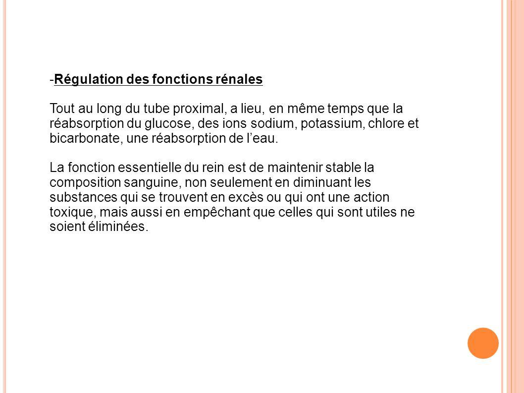 Régulation des fonctions rénales