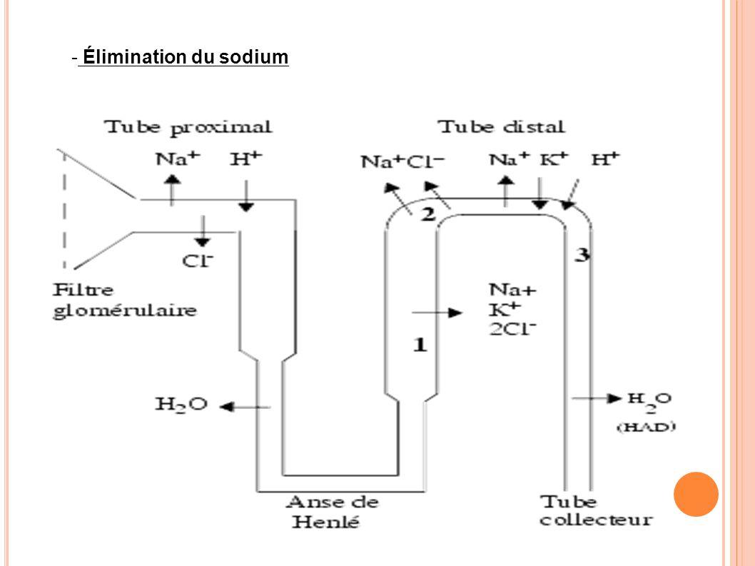 Élimination du sodium