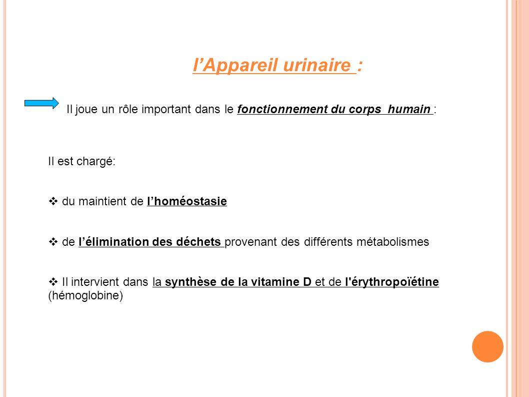 l'Appareil urinaire : Il joue un rôle important dans le fonctionnement du corps humain : Il est chargé: