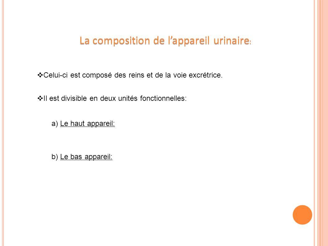 La composition de l'appareil urinaire: