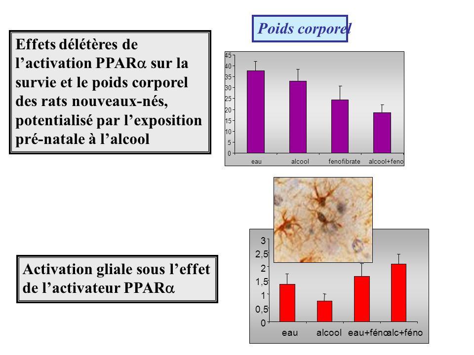Activation gliale sous l'effet de l'activateur PPAR