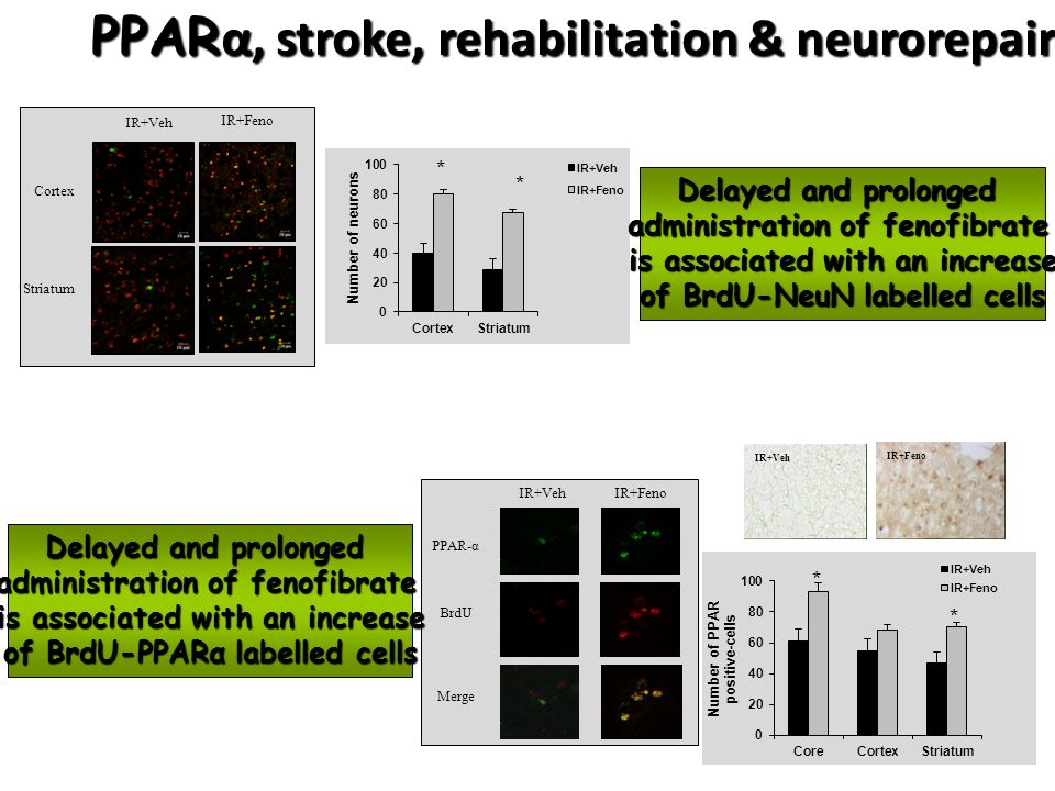 PPARα, stroke, rehabilitation & neurorepair