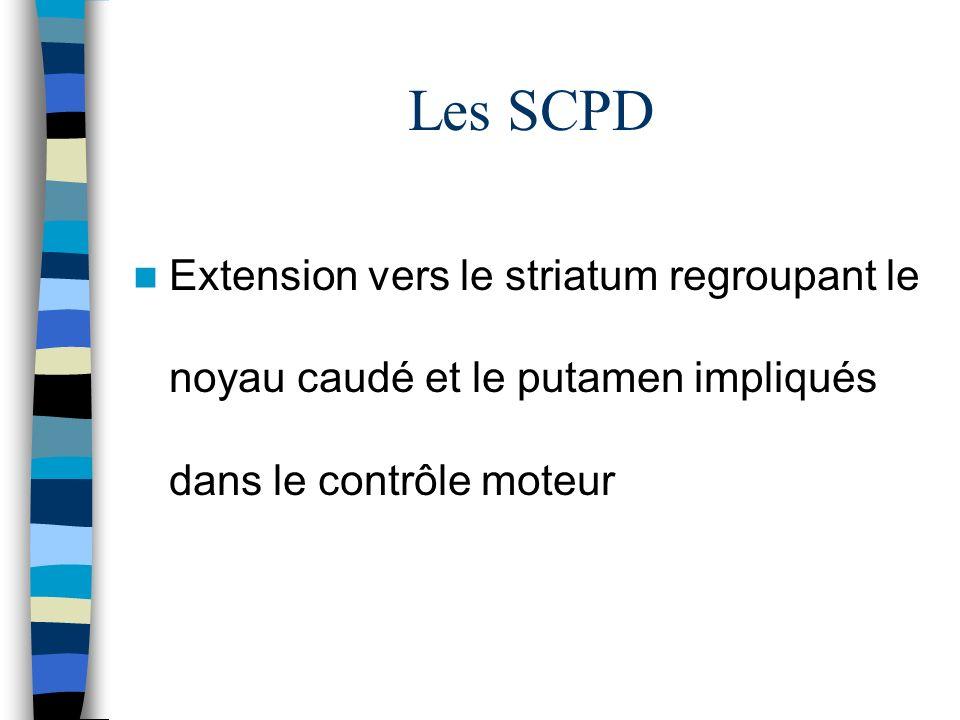 Les SCPD Extension vers le striatum regroupant le noyau caudé et le putamen impliqués dans le contrôle moteur.