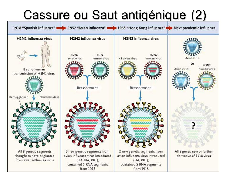 Cassure ou Saut antigénique (2)