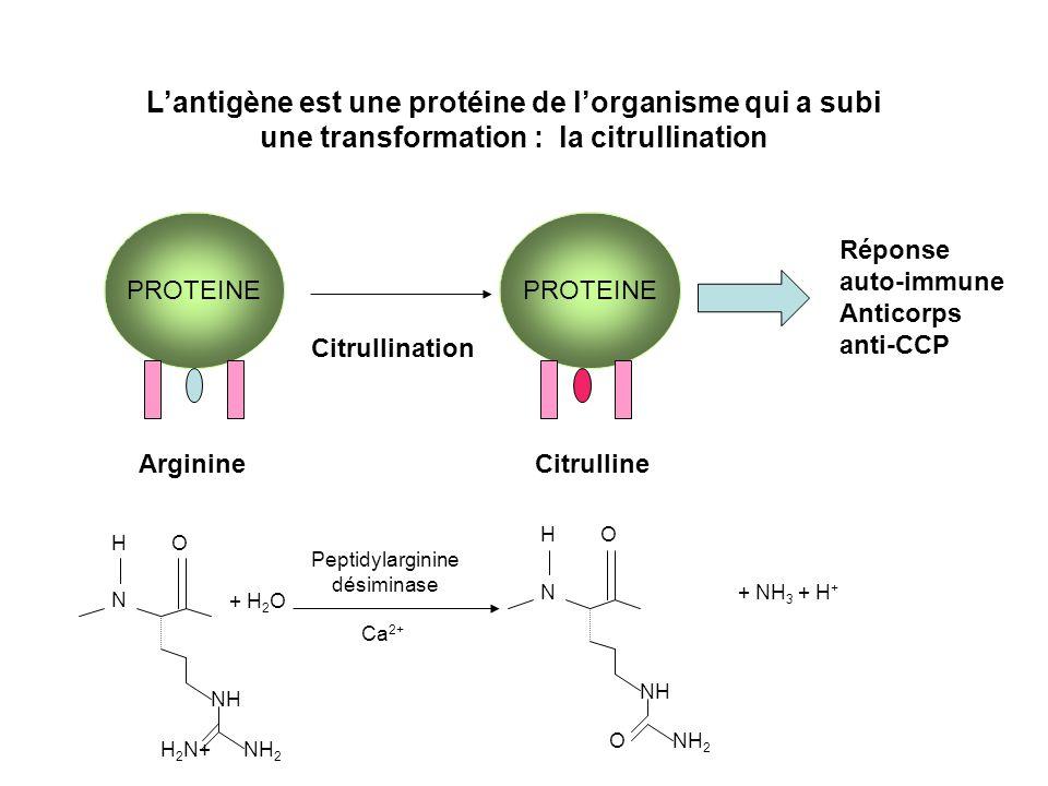 L'antigène est une protéine de l'organisme qui a subi