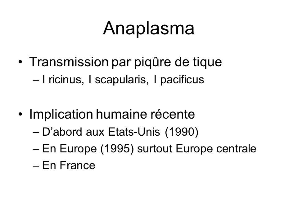 Anaplasma Transmission par piqûre de tique Implication humaine récente