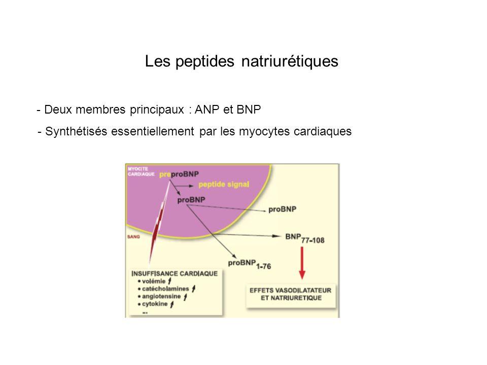 Les peptides natriurétiques