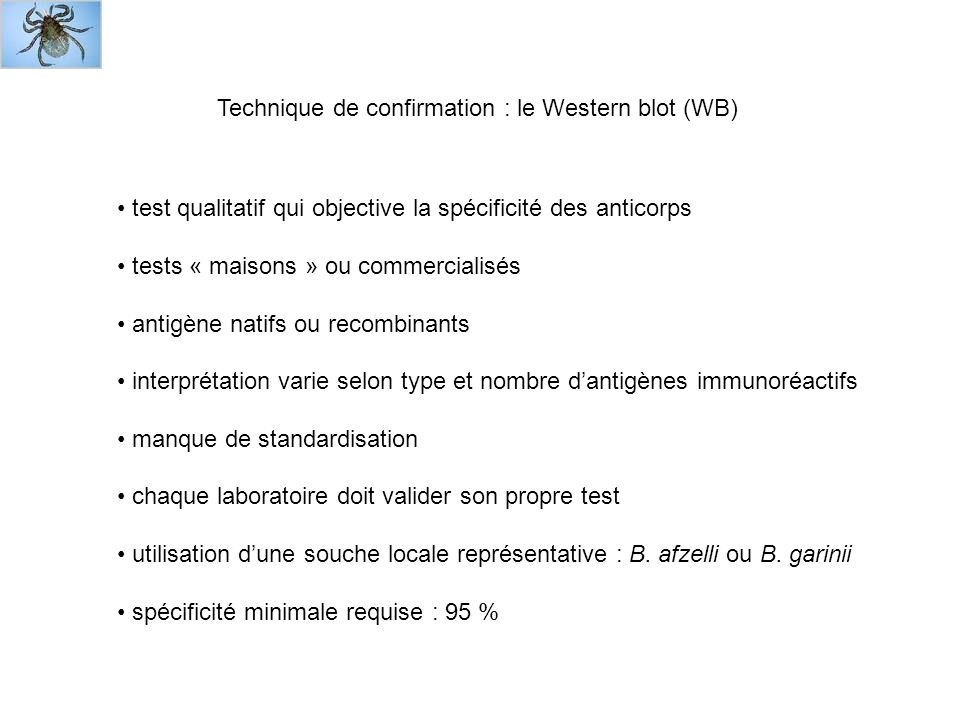 Technique de confirmation : le Western blot (WB)