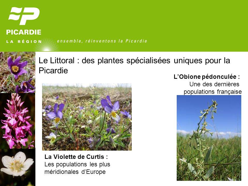 Le Littoral : des plantes spécialisées uniques pour la Picardie