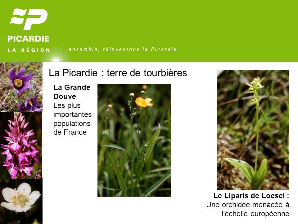 La Picardie : terre de tourbières