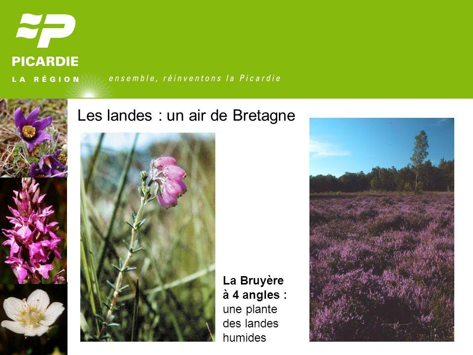 Les landes : un air de Bretagne