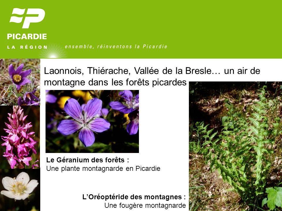 Laonnois, Thiérache, Vallée de la Bresle… un air de montagne dans les forêts picardes