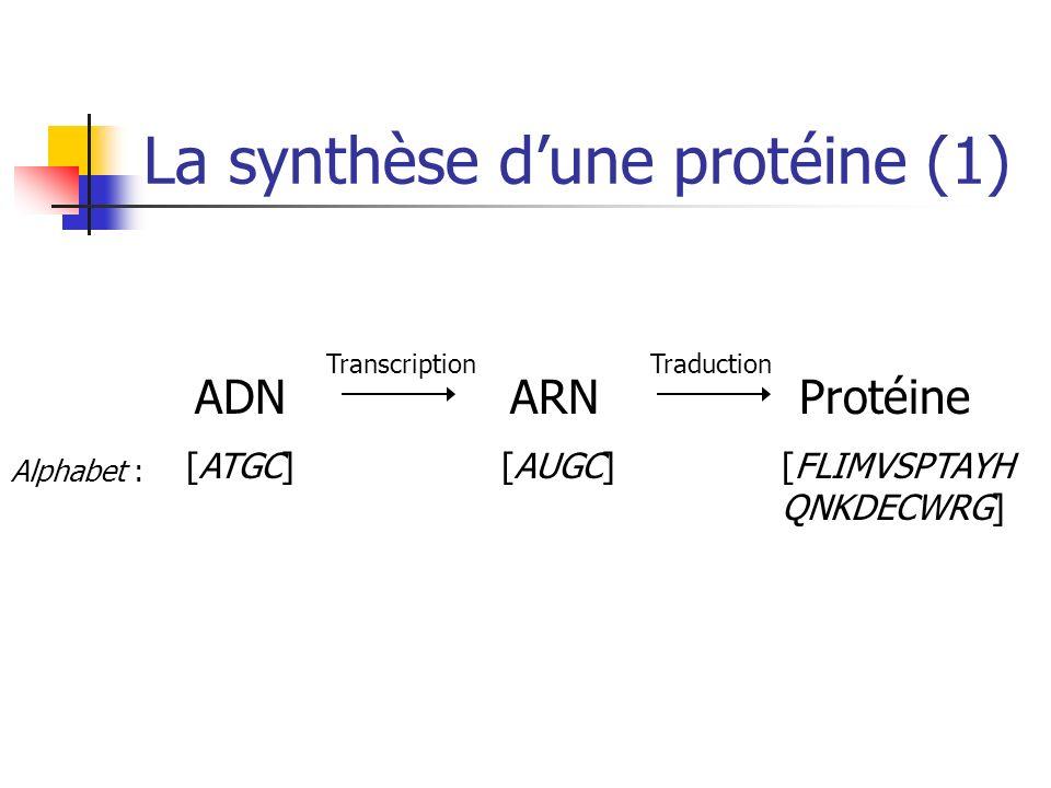 La synthèse d'une protéine (1)