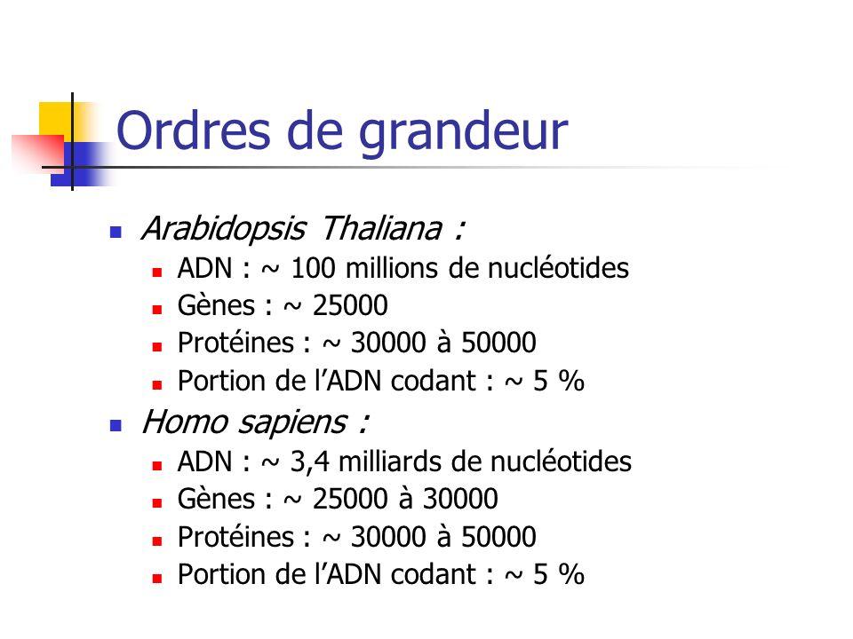 Ordres de grandeur Arabidopsis Thaliana : Homo sapiens :