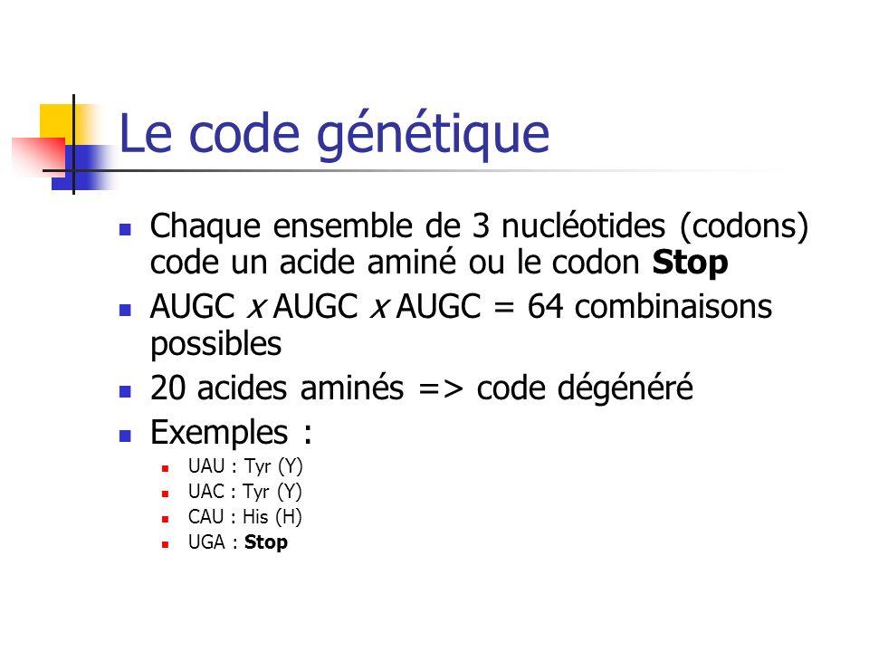 Le code génétique Chaque ensemble de 3 nucléotides (codons) code un acide aminé ou le codon Stop. AUGC x AUGC x AUGC = 64 combinaisons possibles.