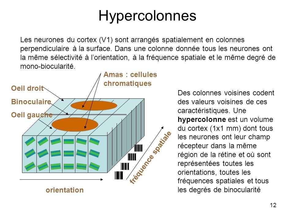 Hypercolonnes