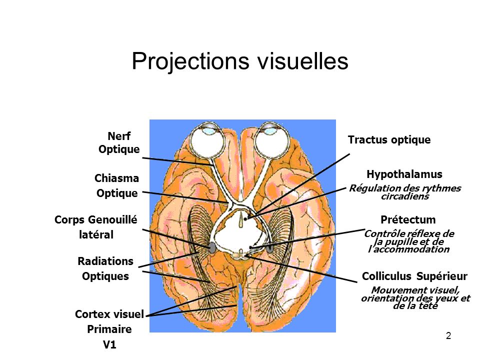 Projections visuelles