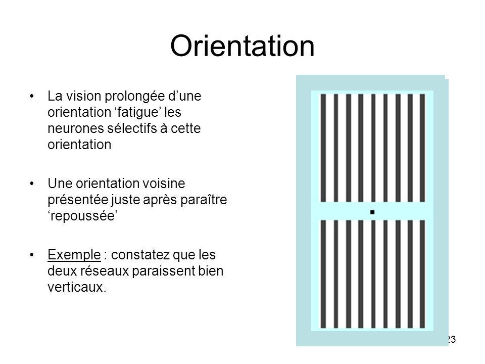 Orientation La vision prolongée d'une orientation 'fatigue' les neurones sélectifs à cette orientation.