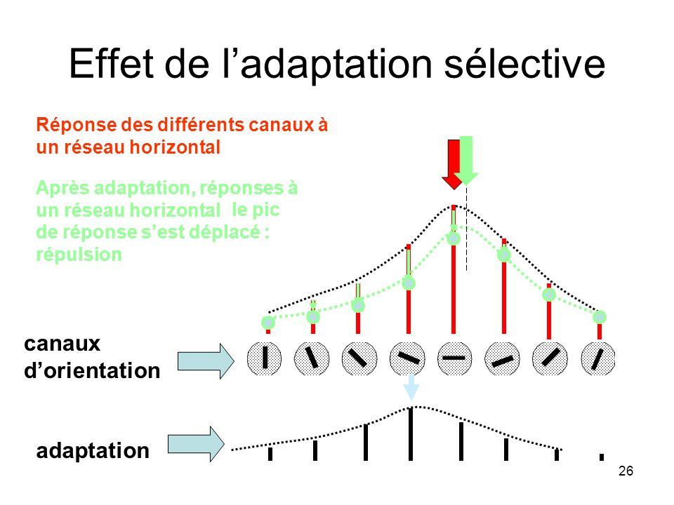Effet de l'adaptation sélective