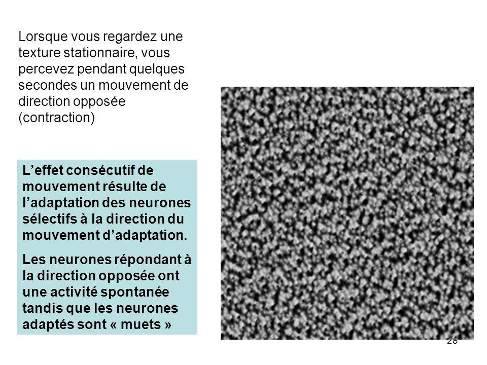 Lorsque vous regardez une texture stationnaire, vous percevez pendant quelques secondes un mouvement de direction opposée (contraction)
