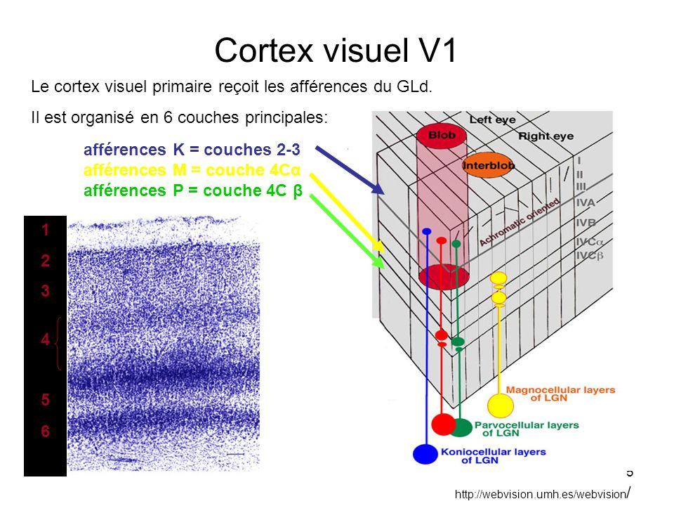 Cortex visuel V1 Le cortex visuel primaire reçoit les afférences du GLd. Il est organisé en 6 couches principales: