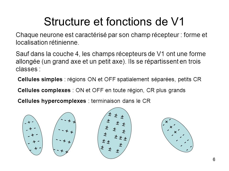 Structure et fonctions de V1