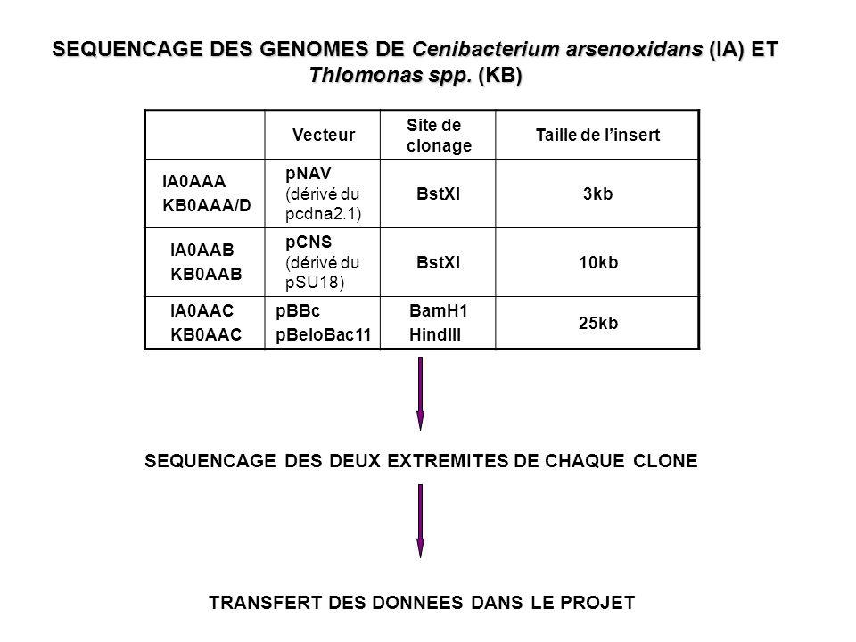 SEQUENCAGE DES GENOMES DE Cenibacterium arsenoxidans (IA) ET Thiomonas spp. (KB)