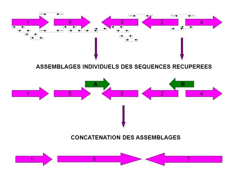 1 5. 3. 2. 4. ASSEMBLAGES INDIVIDUELS DES SEQUENCES RECUPEREES. A. B. 1. 5. 3. 2. 4. CONCATENATION DES ASSEMBLAGES.