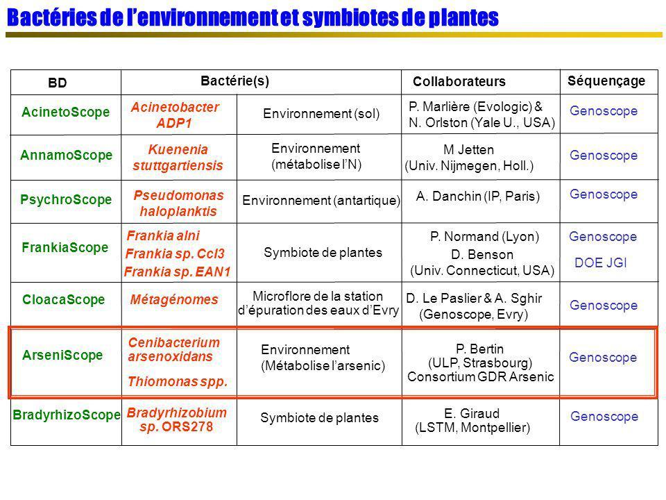Bactéries de l'environnement et symbiotes de plantes
