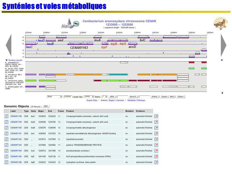Synténies et voies métaboliques