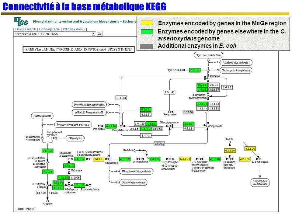 Connectivité à la base métabolique KEGG