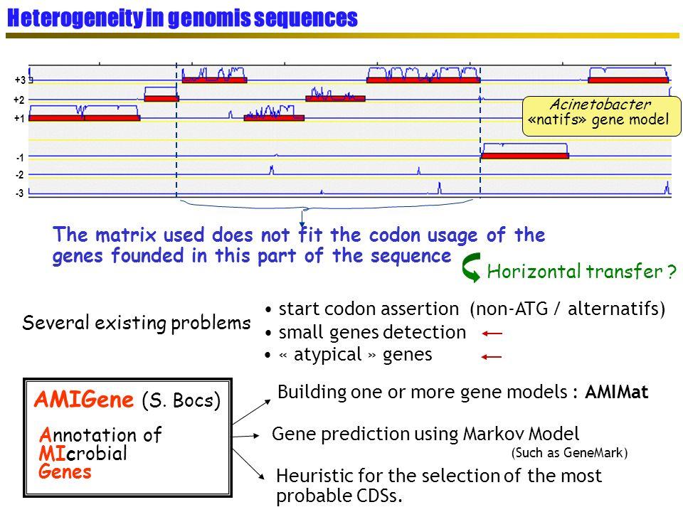Heterogeneity in genomis sequences