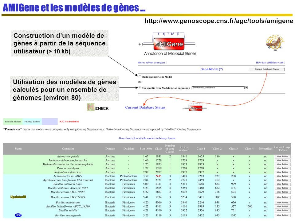 AMIGene et les modèles de gènes …