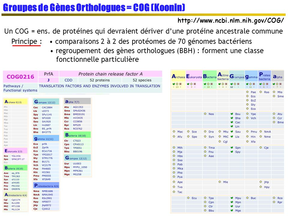 Groupes de Gènes Orthologues = COG (Koonin)
